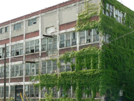 Vine-covered building in Windsor