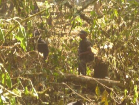 Soldiers destroyed crops in Se' Job' Che', Alta Verapaz, Guatemala (photo by CONIC)