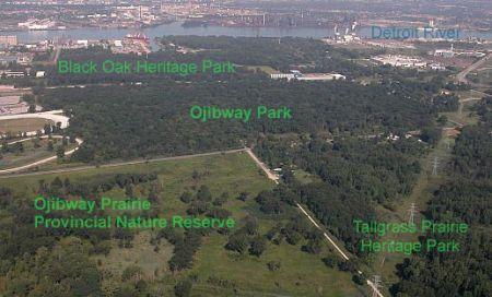 Aerial photo of the Ojibway Prairie Complex, courtesy ojiway.ca