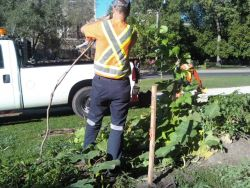 0928020952a City of Toronto Workers Destroy Free Community Food Garden Amid Growing Food Crisis