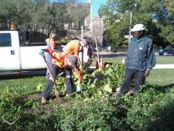 0928020954 City of Toronto Workers Destroy Free Community Food Garden Amid Growing Food Crisis