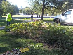 garden photo 3 City of Toronto Workers Destroy Free Community Food Garden Amid Growing Food Crisis