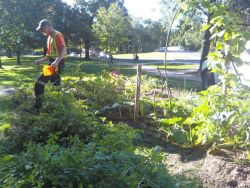 "Occupy Gardens was going to harvest the food tomorrow for their ""Autumn Jam: A Harvest Party"""